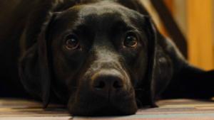 Co pies wie o człowieku