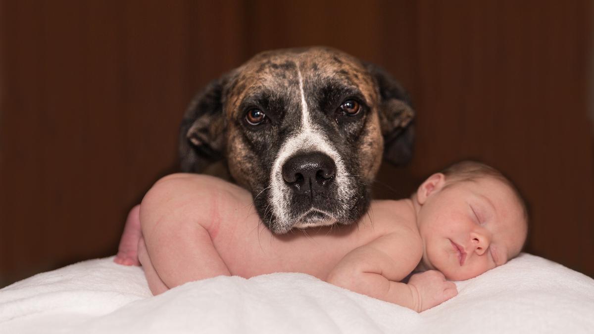 Niemowlę i pies