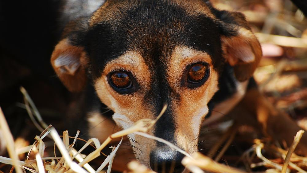 Co zrobić, gdy pogryzie pies