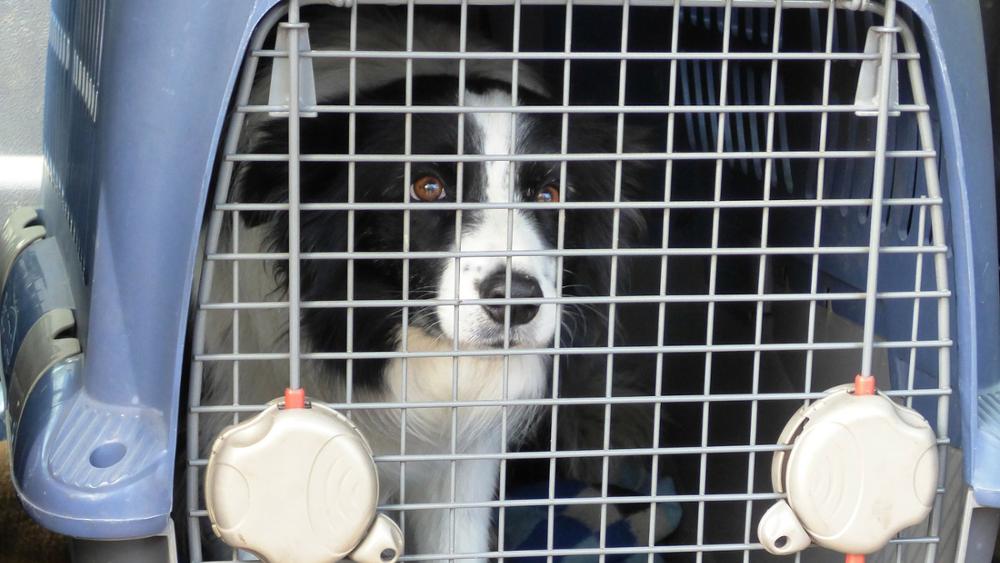 Pies w podróży – czyli jak przewozić pupila samochodem