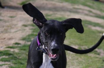 Pies ucieka podczas spaceru