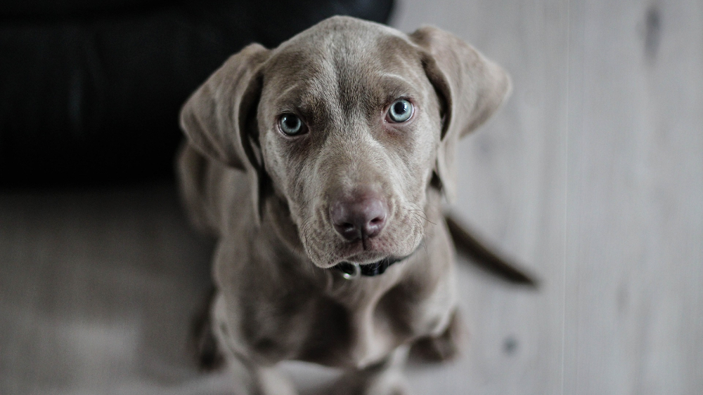 10 najczęstszych błędów popełnianych podczas nauki psa