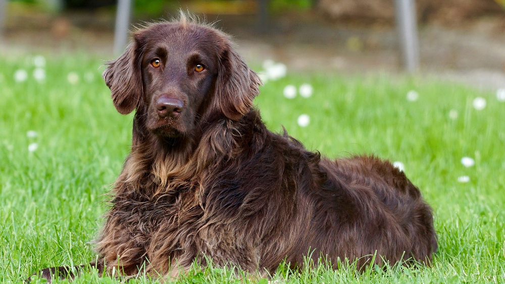 Jakim byłbyś psem – czyli grupy ras FCI z uśmiechem