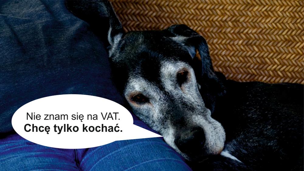 Czy koszt utrzymania psów wzrośnie przez projekt ustawy o VAT?